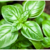 Basil, Sweet, Organic: 10ml.