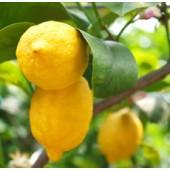 Lemon, organic: 10 ml.